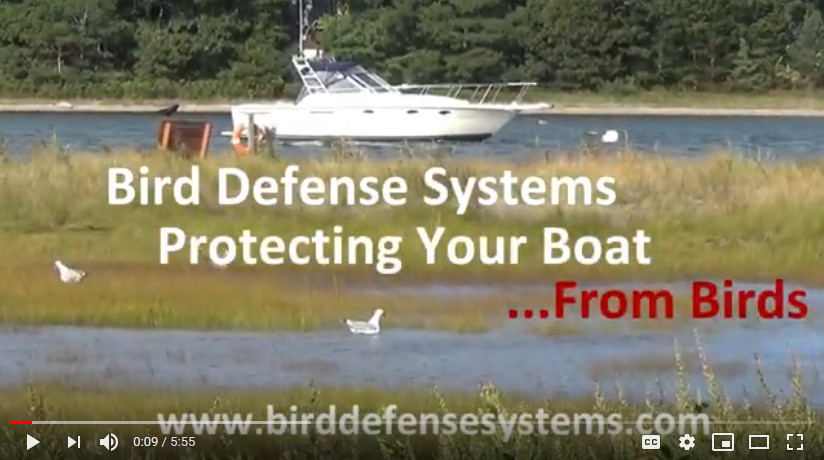 Bird Deterrent for Boats Video